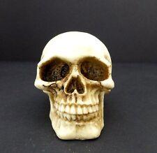 Skull Head Small Figurine Halloween Decoration Statue New