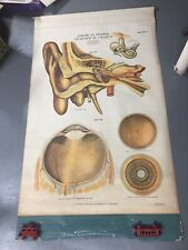 Antique Nystrom Anatomical / Medical Chart Human Eye Ear Anatomy