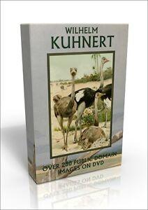 Friedrich Wilhelm Kuhnert - over 250 public domain wildlife & bird pics on DVD