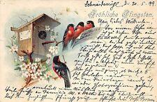 BG8273 bird house oisseaux   pfingsten Pentecost greetings germany