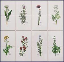 10x10 Küchenfliesen mit Kräutermotiven Basilikum Schnittlauch Rosmarin Thymian