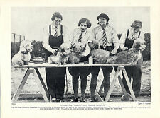 DANDIE DINMONT TERRIER KENNEL GIRLS GROOMING DOGS OLD PRINT PAGE FROM 1934