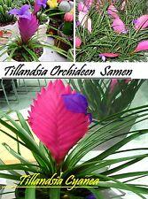 20x Tillandsia Orchideen Samen Zimmer Garten Frisch Seltene Pflanze Rarität #53