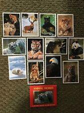 Vintage retro Animal World flashcard card set from 1970s 1980s Impact #61