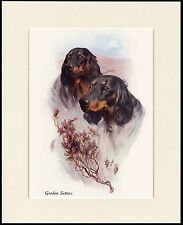 GORDON SETTER TWO DOGS HEAD STUDY LOVELY DOG PRINT MOUNTED READY TO FRAME