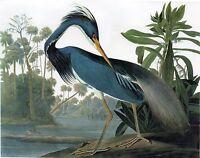 Audubon: Birds of America: Louisiana Heron Painting - 8x10 Real Canvas Art Print