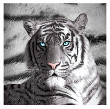 Printed Soft Polar Fleece Throw Rug Blanket | Big Cats | Blue Eyes Tiger