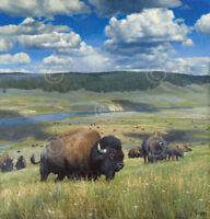 Hayden Wonder by Kyle Sims Art Print Bison Buffalo Field Wildlife Poster 19x20