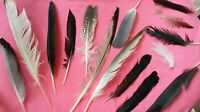 FREE FALLEN real feathers x15 medium SEAGULL, PIGEON,  MAGPIE UK seller