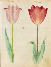 Botanical Postcard: Vintage repro - Pretty Red and Pink Tulips