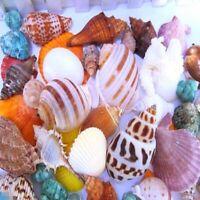 DIY Aquarium Beach Nautical Mixed Shells Seashell Fish Tank Home Ornaments E9I5