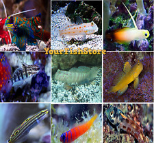 x10 ASSORTED GOBY FISH - SALTWATER - YOURFISHSTORE - FREE SHIPPING