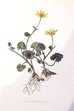 Cartel Escolar Lámina De Póster Escuela Antigua Botánico Art Print Escrofularia