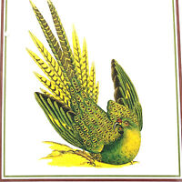 Orenco Original The Ground Parrot Illustration Cross Stitch James Sowersby Chart