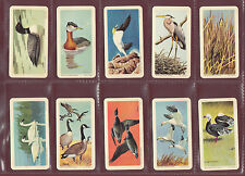 BROOKE BOND CANADA  - SET  OF  48  BIRDS  OF  NORTH  AMERICA  CARDS  -  1962