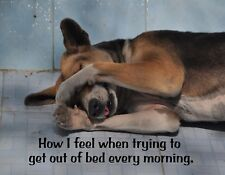 METAL FRIDGE MAGNET How I Feel Trying Get Out Of Bed Dog Friend Humor Funny