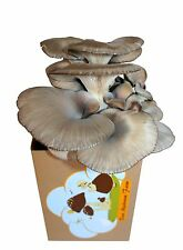 Oyster Mushroom Growing Kit - 3 pounds block- starts to grow in less than 4 days