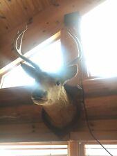 deer mounts for sale