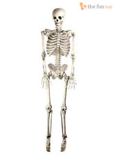 Halloween Poseable Human Skeleton 150cm Full Life Size Party Prop Decoration