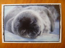 POSTCARD...SEAL PUP....CASEY STATION , ANTARCTIC...OUR AUSTRALIA SERIES...SEAL