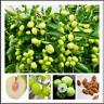 Jujube Big Fruit Tree Tropical Fruit 10 Pcs Seeds Plants Home Garden NEW Bonsai