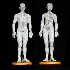 50cm Acupuncture Model Pair - Anatomical Medical Anatomy - Chinese Medicine