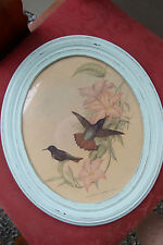 Humming Bird  Aclaeactis Pamela by John Gould Print Antique Oval Frame