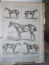 Vintage HORSE Print,SOME AMERICAN RACERS,Harpers,1881