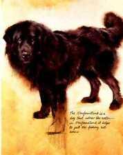 Newfoundland - Vintage Dog Art Print - Poortvliet