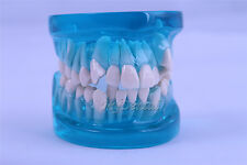 Dental Orthodontics Demonstration Teeth Model Dental Teach Study Tooth Model B5