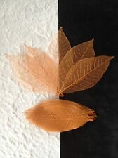 25 Skeleton Leaves Dyed Copper Rubber Tree leaf veins Autumn Invitations small