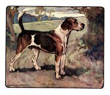 1906 Antique Foxhound Dog Art Print Vernon Stokes Dog Art Illustration 3941q