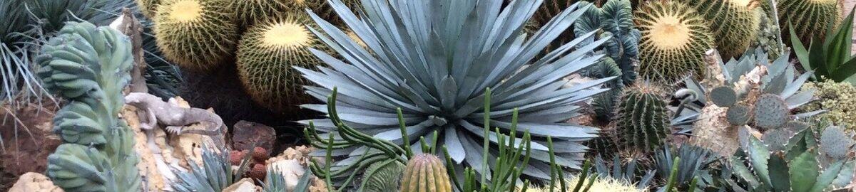 Stefano Colombo Cactus