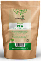 Organic Pea Sprouting Seeds - Microgreen Sprouts Vegetable *Certified Organic*