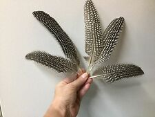 Guinea Fowl wing and tail feathers Pkg of 5 naturally shed black & white 5-8 in