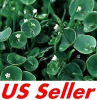 500 Seeds Organic Herb Winter Purslane Seeds T62.5, Claytonia Perfoliata