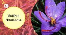 Saffron Threads Tasmania