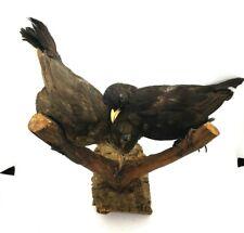 Taxidermy Mounts 2 Birds Stuffed European Brown & Black Home Art Decor Gift Vtg