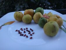 quince  Cydonia  northern citron  25 TREE seeds