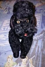 "13""Vtg German Steiff Snobby Poodle Dog Stuffed Mohair Black Joint Toy~Ear Button"