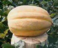 Jumbo Sweet Cantaloupe! 25 Seeds! COMBINED S/H! SEE MY STORE FOR RARE SEEDS!