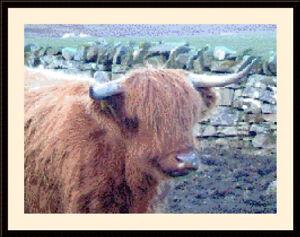 Highland Cow 01 CROSS STITCH KIT