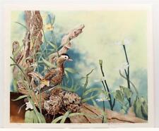 Vintage MICHAEL BUDDEN Mandarin Duck Realism Cute ANIMALS Lithograph SIGNED #88