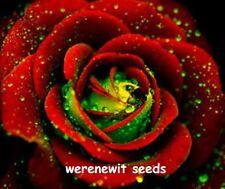RARE GERMAN GREEN HEART,RED ROSE SEEDS x 20FREE POST,AUST SELLER