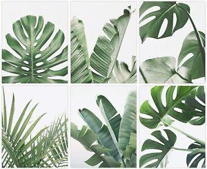 "Botanical Wall Art Print Set of 6 Tropical Plant Leaves Wall Art 8""x10"" UNFRAMED"