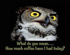 METAL FRIDGE MAGNET Owl Bird What Mean How Much Coffee Today Family Friend Humor