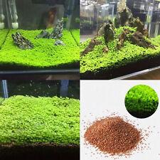 Aquarium Plant Seeds Aquatic Double Leaf Carpet Water Grass Fish Tank Decor US