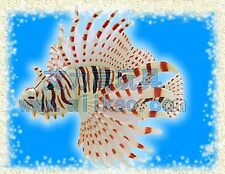 4D Animal Puzzle Toy Assembly Lion Fish Egg #B-20