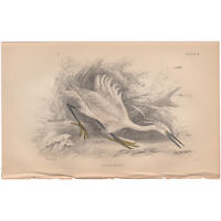 Jardine/Lizars antique hand-colored engraving bird print Pl 4 Little Egret