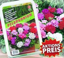 Geranie Mix Pelargonium Set Treibhaus Pflanzenset Gewächshaus Samen Anzuchtset